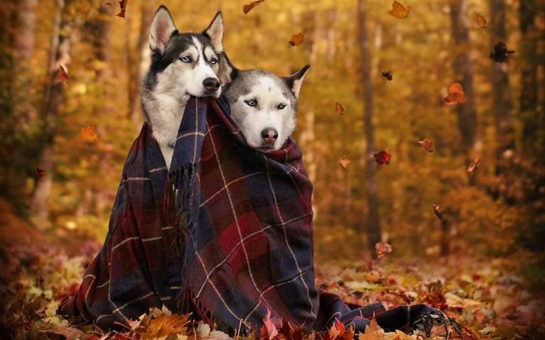 寒流警報!狗狗冬天保暖5大重點,鏟屎官快筆記下來!