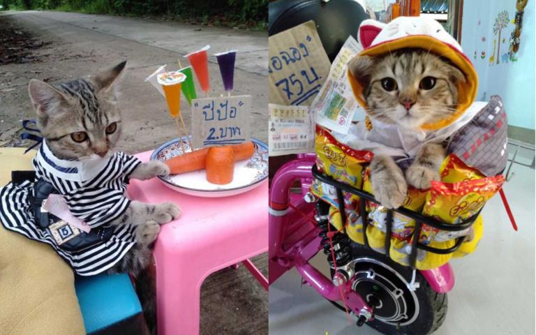 管牠賣什麼,我還不買爆?泰國「貓咪老闆」一夕爆紅,來跟人類搶生意啦!