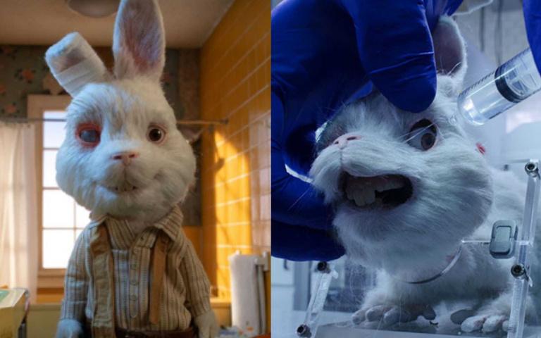美麗不該犧牲生命!一段實驗兔的心碎自白,逼哭全球網友...