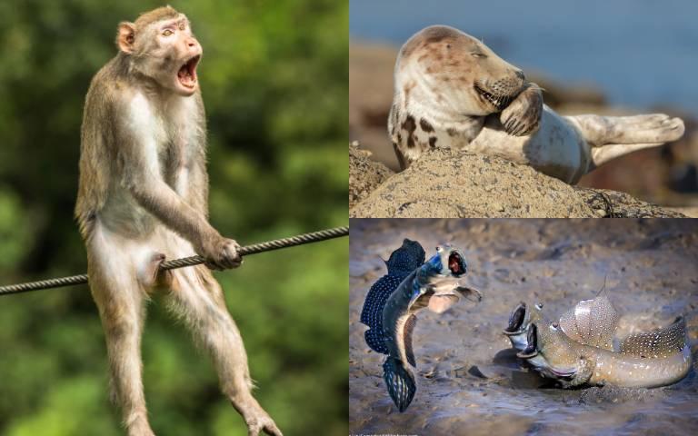 「這張照片」來自台灣!「2021搞笑野生動物攝影獎」入圍名單出爐,「崩潰猴子」、「奸笑海豹」選不出來啦!